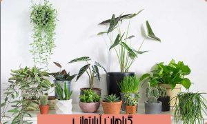 ۱۲ گیاه آپارتمانی برای نگهداری کنار پنجره گیاه آپارتمانی گیاهان آپارتمانی مقاوم