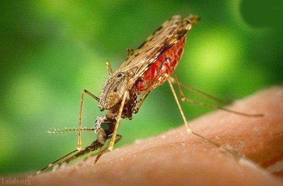مرگبارترین حشرات دنیا در کره زمین